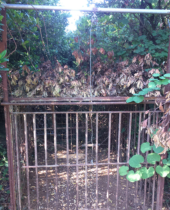 38f6e485d0c3 ... Ομοσπονδιακοί Θηροφύλακες της Ε  Κυνηγετικής Ομοσπονδίας εντόπισαν και  κατέσχεσαν ένα σιδερένιο κλουβί